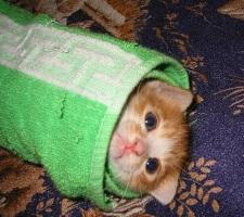 kitten-burrito.jpg
